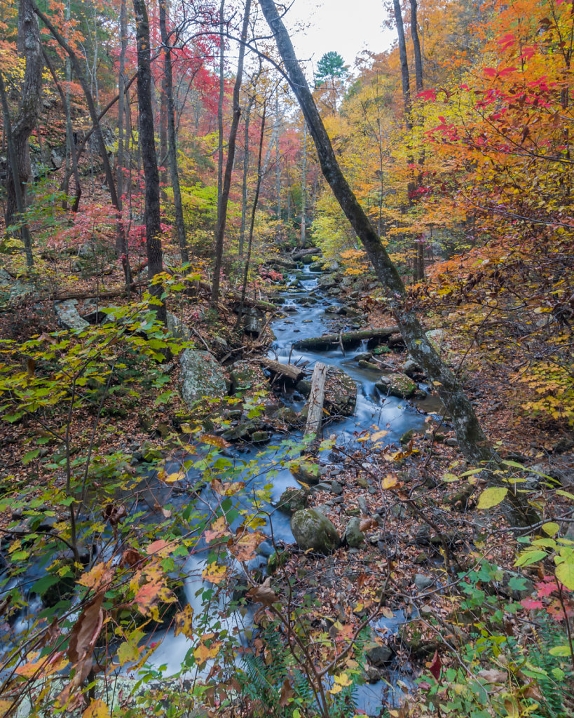 Roaring Run in Fall #2